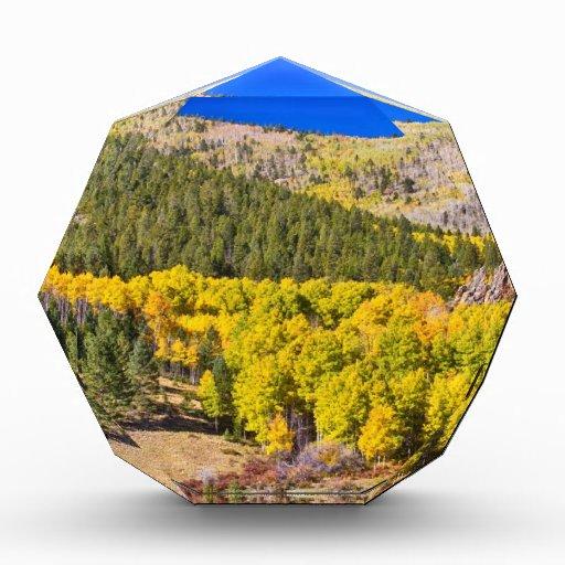 Azul del oro de Colorado