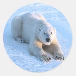 Azul del oso polar etiqueta redonda