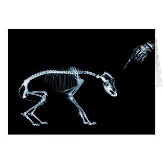 Azul del perro de los esqueletos de la radiografía tarjeta