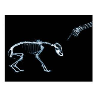 Azul del perro de los esqueletos de la radiografía tarjeta postal