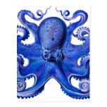 Azul del pulpo de Haeckel Postales