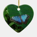 Azul iridiscente con las alas negras de la maripos adorno de reyes
