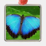 Azul iridiscente con las alas negras de la maripos ornamente de reyes