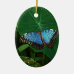 Azul iridiscente con las alas negras de la maripos adornos de navidad