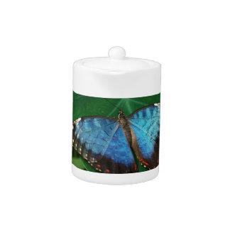 Azul iridiscente con las alas negras de la maripos
