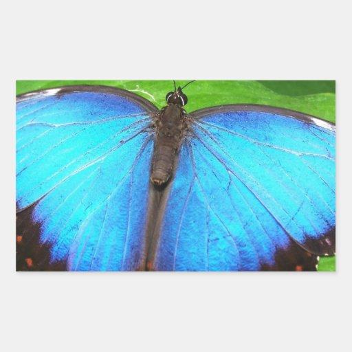 Azul iridiscente con las alas negras de la rectangular pegatina
