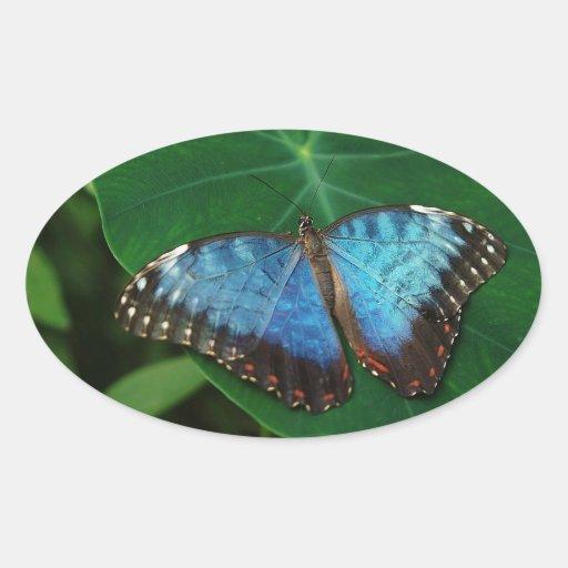 Azul iridiscente con las alas negras de la pegatina de ovaladas