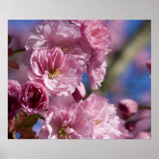 Azul japonés del rosa de la foto del primer de la póster