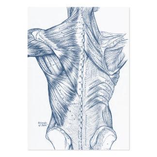 Azul médico de los músculos traseros del dibujo tarjetas de visita grandes