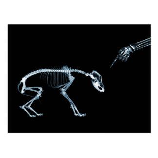 Azul negro esquelético de la mala radiografía del  postal