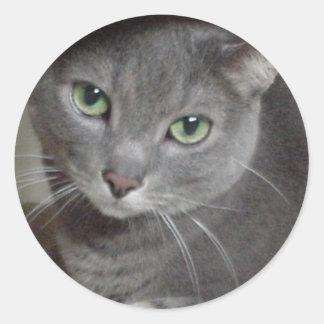 Azul ruso del gato gris etiqueta redonda