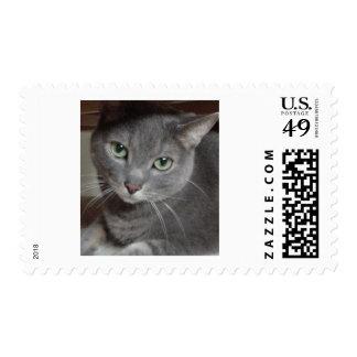 Azul ruso del gato gris sello