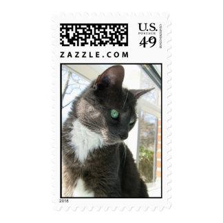 azul ruso del sello del gato en ventana