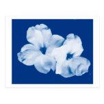 Azul y blanco postal