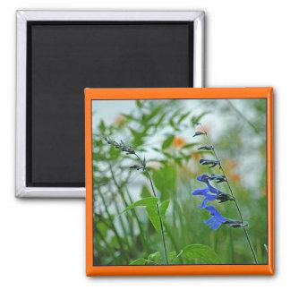 Azul y naranja florece el imán de la foto