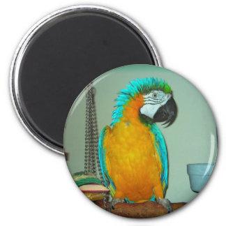 Azul y oro Maccaw Imán Redondo 5 Cm