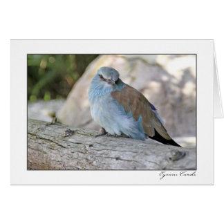 Azul y pájaro de Brown Tarjeta De Felicitación