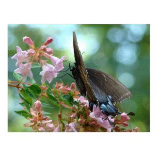 Azules de la mariposa del verano postales
