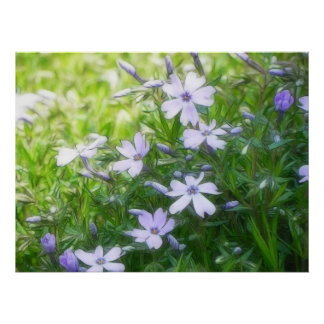 Azules del jardín de la primavera - Phlox del arra Impresiones