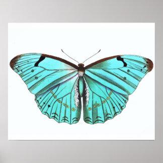 Azules turquesas del poster de la mariposa del