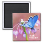 Azure Butterfly 2 Inch Square Magnet