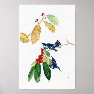 Azure Warbler John James Audubon Birds of America Poster