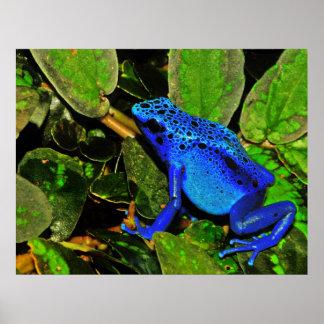 Azureus azul de Dendrobates de la rana del dardo d Impresiones