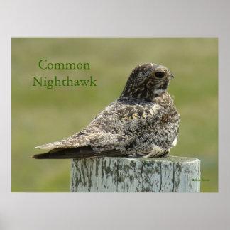 B0002 Commom Nighthawk Poster