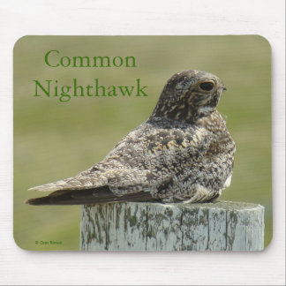 B0002 Common Nighthawk Mouse Pad