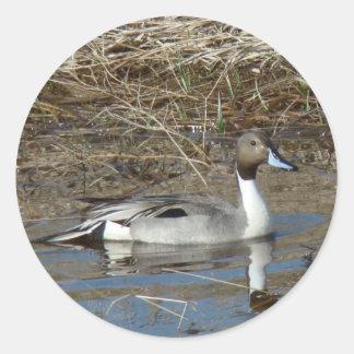 B0005 Pintail Duck Round Stickers