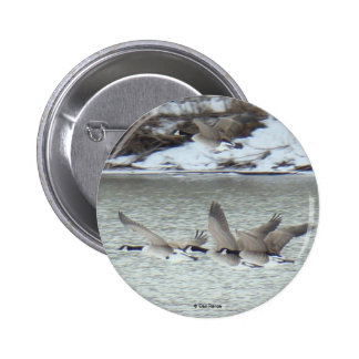 B0007 Canadian Geese in Flight button