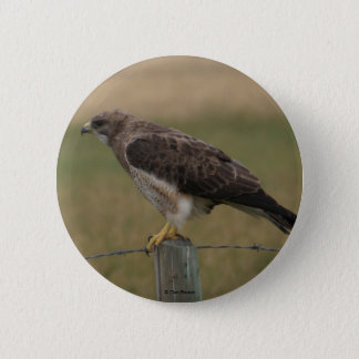 B0010 Swainsons Hawk button