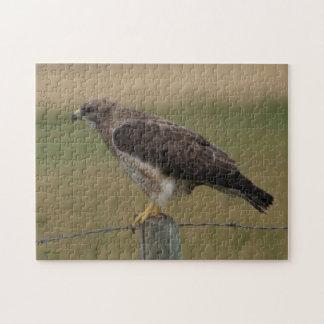 B0010 Swainsons Hawk Puzzles