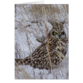 B0011 Short-eared Owl Card