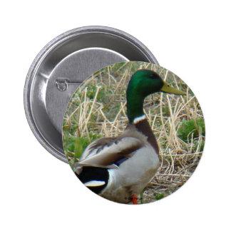 B0012 Mallard Duck Drake button
