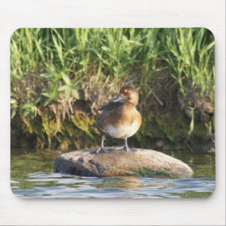 B0018 Lesser Scaup Mouse Pad
