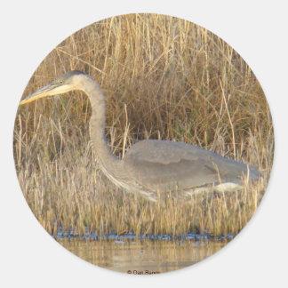 B0019 Blue Heron Juvenile sticker