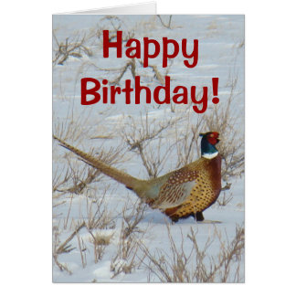 B0022 Ring-necked Pheasant Card