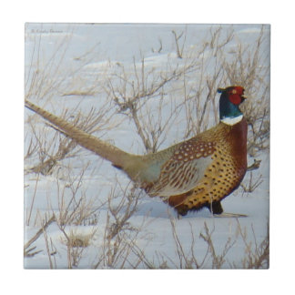 B0022 Ring-necked Pheasant Small Square Tile