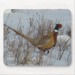 B0023 Ring-necked Pheasant Mouse Pad