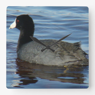 B0027 Common Coot Square Wall Clock