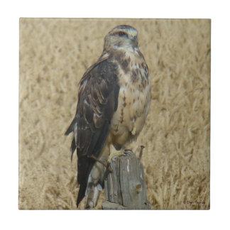 B0035 Ferruginous Hawk Ceramic Tile