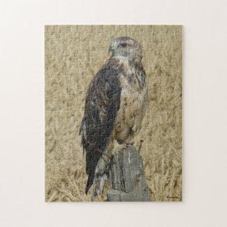 B0036 Ferruginous Hawk Puzzles