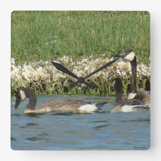 B0037 Canadian Geese Square Wall Clock