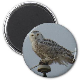 B0038 Snowy Owl 2 Inch Round Magnet