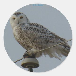 B0038 Snowy Owl Classic Round Sticker