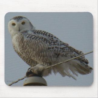 B0038 Snowy Owl Mouse Pad