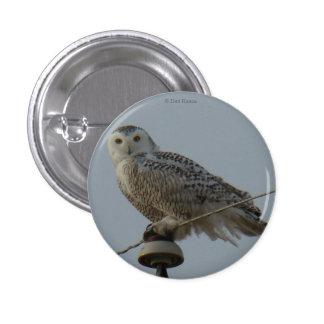 B0038 Snowy Owl Pinback Button