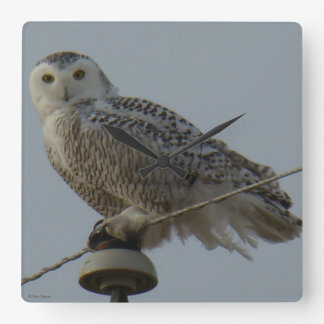 B0038 Snowy Owl Square Wall Clock