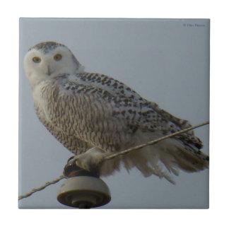 B0038 Snowy Owl Tile